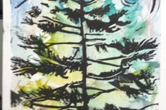 brooks_one-spruce-proof