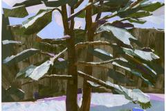 brooks_robin_winter-pine