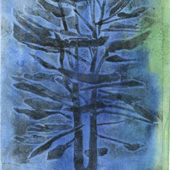 brooks_blue-pine