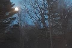 brooks_moon-and-pine