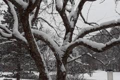 brooks_snowy-tree_2021