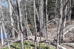 brooks_spring-woods_head-of-tide-park