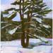 Winter Pine thumbnail